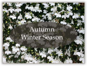 Special-Offer-Autumn-Winter-2